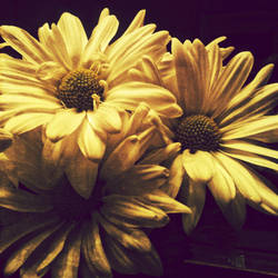 Daisy 1 by kimberlymeg