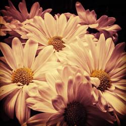 Daisy 2 by kimberlymeg