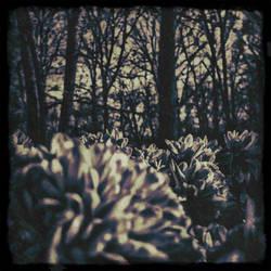 Midnight by kimberlymeg