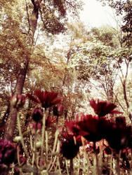 Backyard Adventure by kimberlymeg