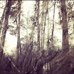 Falling Sky by kimberlymeg