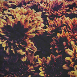 Autumn Flowers by kimberlymeg