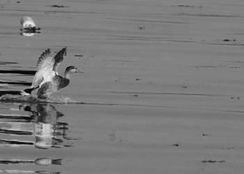 Landing by eiryn89