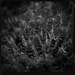 Metalcrop by FranticMezmer