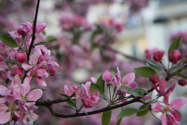 Spring in Prague. by Dracula-Annie