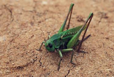 Grasshoper. by appylovesyou