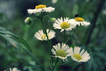 smells like spring. by appylovesyou