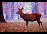 Red Deer by KeldBach