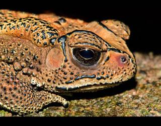 Melancholy Toad by KeldBach