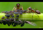 Clever Ants by KeldBach