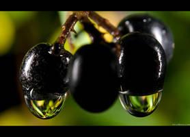 Privet Drops by KeldBach