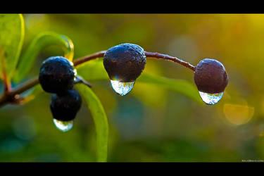 Frozen Drops by KeldBach
