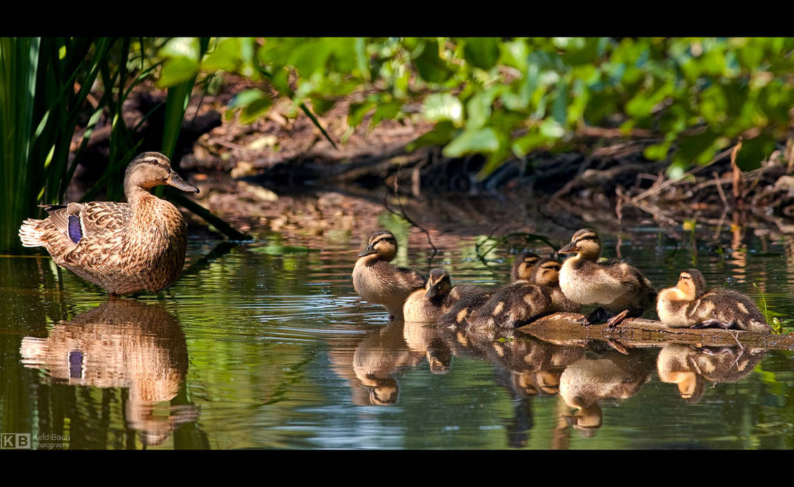 Mommy and Ducklings by KeldBach