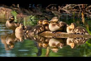 Six in a Row by KeldBach