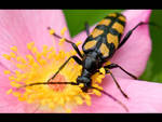 Black and Yellow Bug by KeldBach