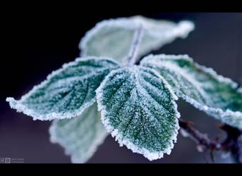 Frosty Bramble Leaves by KeldBach