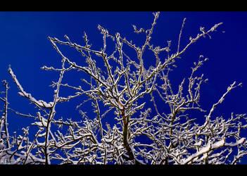 Spring Time Yet? by KeldBach