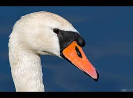 Swan Profile by KeldBach