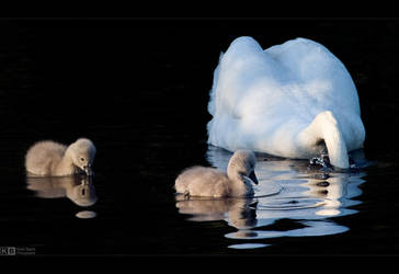 Just Do Like Mommy by KeldBach