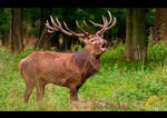 Rutting Season by KeldBach