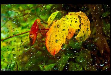 Autumn Rain by KeldBach