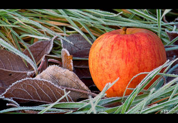 Last Apple by KeldBach