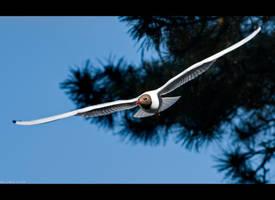 Gliding by KeldBach