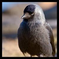 Sad Bird by KeldBach