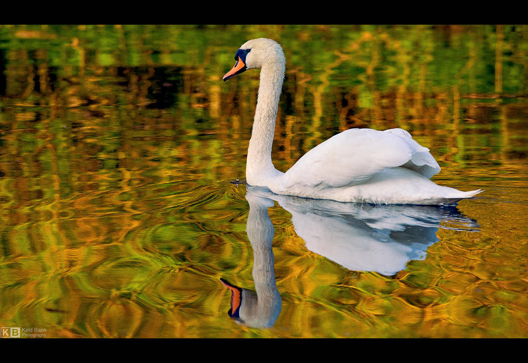 Evening Swim by KeldBach