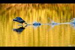 Running on Water by KeldBach