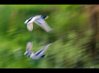 Ghost Flight by KeldBach