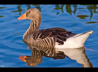 Goose in Blue by KeldBach