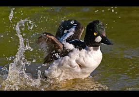 Splashing by KeldBach