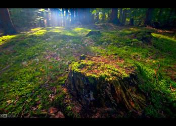 Mossy Stump by KeldBach
