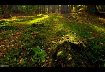 Forest Floor by KeldBach