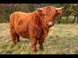 Young Highlander by KeldBach