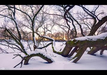 Fallen Giant, Winter by KeldBach