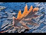 Last Sign of Winter by KeldBach