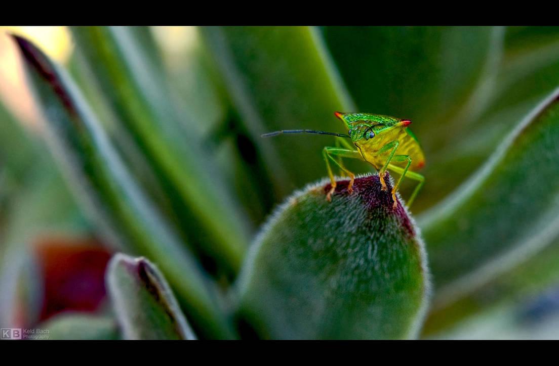 Neon Bug by KeldBach