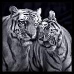 Affection in B/W by KeldBach