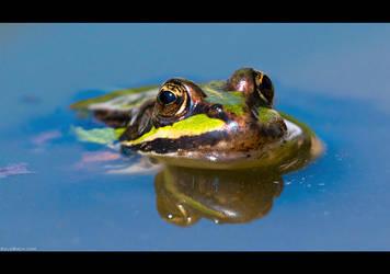 My Little Green Frog by KeldBach