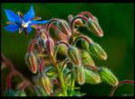 Little Blue Star by KeldBach
