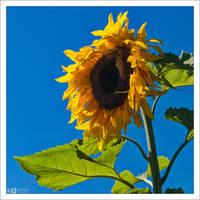 You are My Sunshine... by KeldBach