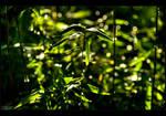Bamboo Glitter by KeldBach