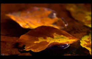 Autumn has Arrived by KeldBach