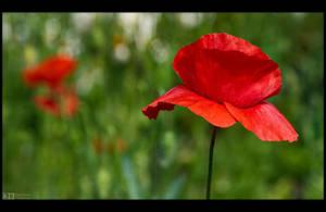 Poppy Time Again by KeldBach