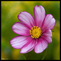 Dual-Coloured Cosmos by KeldBach