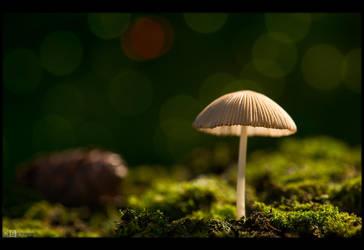 Tiny Shroom by KeldBach