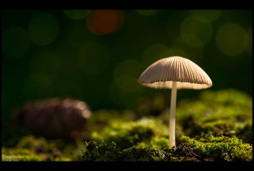 Tiny Shroom by KeldBach