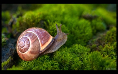 Adventurous Grove Snail by KeldBach